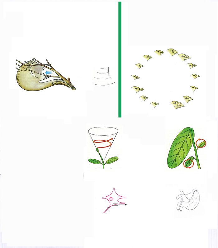Francesco Cavaliere, test per nomenclatura animale attorno forze inspiegabili, courtesy of the artist